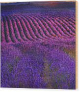 Height Of The Bloom Rolling Lavender Fields Wood Print