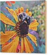 Helenium Bumble Bee Wood Print