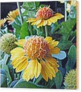 Helenium Flowers 1 Wood Print