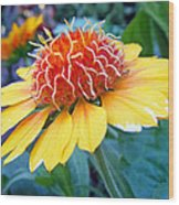 Helenium Flowers 2 Wood Print