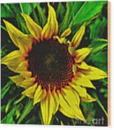 Helianthus Annus - Sunnydays Wood Print