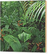 Heliconia And Palms With Green Anole Wood Print