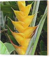 Heliconia Caribea Wood Print