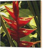 Heliconia II Wood Print