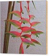Heliconia Platystachys Wood Print