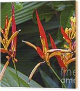 Heliconia Psitacorum Wood Print