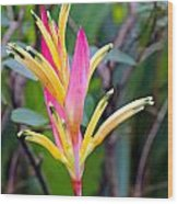 Heliconia Psittacorum Wood Print