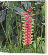 Heliconia Rostata Wood Print