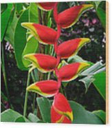 Heliconia Rostrata 2 - A Blooming Heliconia Rostrata Flower Wood Print