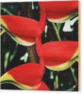 Heliconia Rostrata Wood Print
