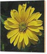 Heliopsis Summer Sun Wood Print