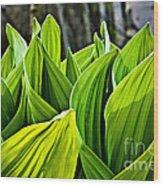 Hellebore And Aspens Wood Print