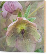 Hellebore Flower Wood Print