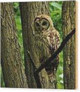 Hello Barred Owl Wood Print