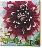 Hello Dahlia Wood Print