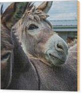 Hello Donkey Wood Print