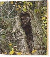 Hello Is There Anybody Out There? Wood Print