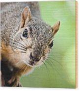 Hello Squirrel Wood Print