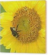 Hello Sunflower Wood Print
