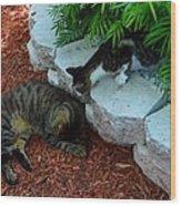 Hemingway Cats Wood Print