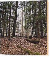 Hemlock Forest Wood Print
