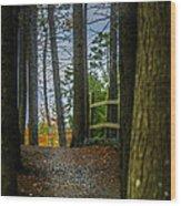Hemlock Ravine Park Wood Print
