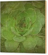 Hen And Chicks Plant Wood Print