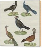 Hen-like Birds Of Hot Countries Wood Print