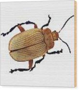 Henry Lin Beetle Wood Print