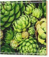 Hens And Chick Plants Wood Print
