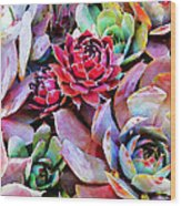 Hens And Chicks Series - Copper Tarnish  Wood Print