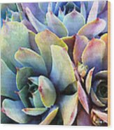 Hens And Chicks Series - Soft Tints Wood Print by Moon Stumpp