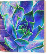 Hens And Chicks Series - Touches Of Blue  Wood Print