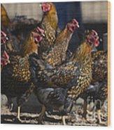Hens Of Distinction Wood Print
