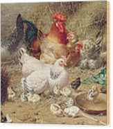 Hens Roosting With Their Chickens Wood Print