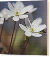 Hepatica White Wildflower Wood Print