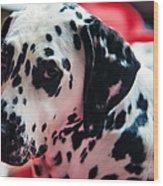 Her Eyes. Portrait Of Dalmation Dog. Kokkie Wood Print