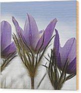 Heralding Spring  Wood Print