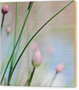 Herb Garden Wood Print