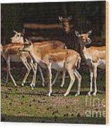 Herd Of Blackbuck Antilopes In A Dark Forest Wood Print