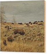 Herd Of Buffalo Wood Print