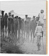 Herd Of Camels Wood Print