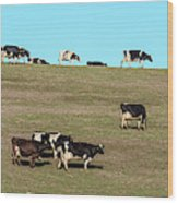 Herd Of Cows Grazing On A Hill, Point Wood Print
