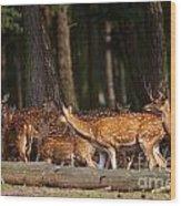 Herd Of Deer In A Dark Forest Wood Print