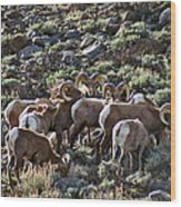 Herd Of Horns Wood Print