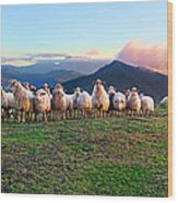 Herd Of Sheep In The Sunset Wood Print