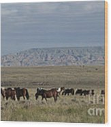 Herd Of Wild Horses Wood Print by Juli Scalzi