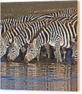 Herd Of Zebras Drinking Water Wood Print