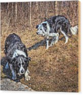 Herder And Herded Wood Print