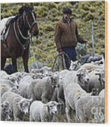 Herding Sheep Patagonia 3 Wood Print